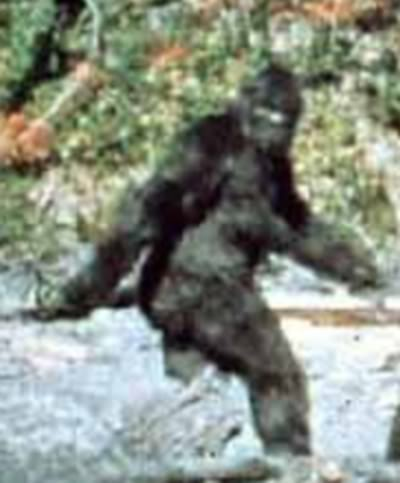 Man Trying To Stage A Fake Bigfoot Sighting Becomes Roadkill