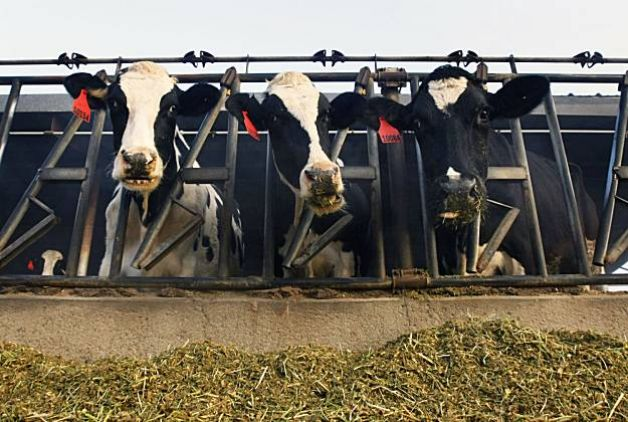 Forget The Fiscal Cliff, We're Facing A Milk Cliff