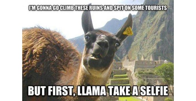 Wait. Doesn't every llama take a taxi?
