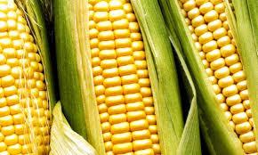 OPEN THREAD–Iowa Cancels Straw Poll