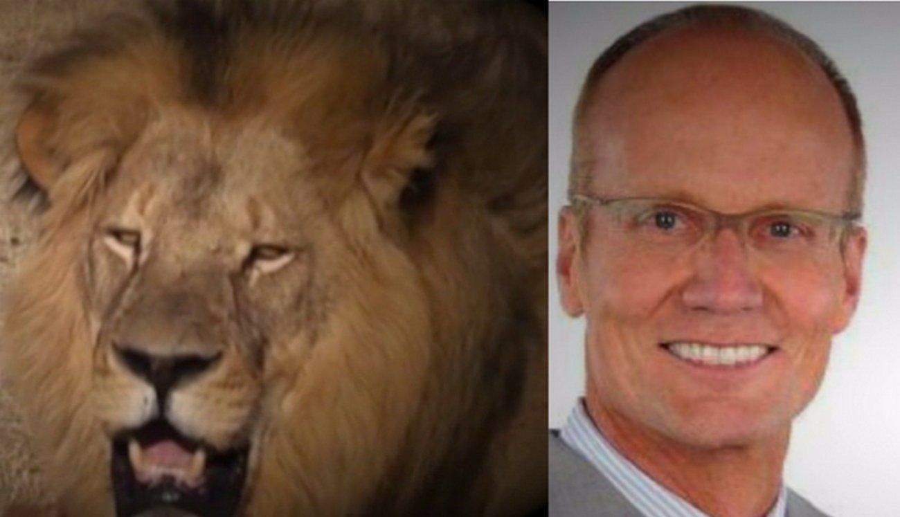 Killer Dentist of Cecil the Lion Will Likely Be Extradited to Zimbabwe to Face …
